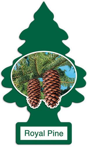 24x Royal Pine