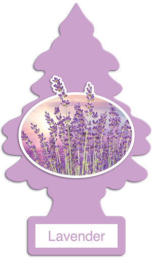 24x Lavender